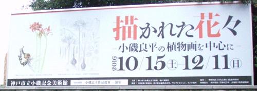 Koiso1611-1.JPG